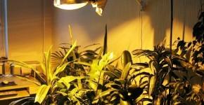 лампы для цветов