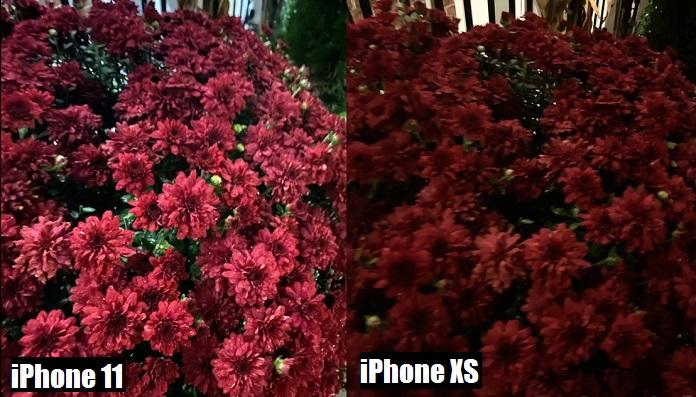 сравнение качества фото с камер iphone 11 и iphone xs