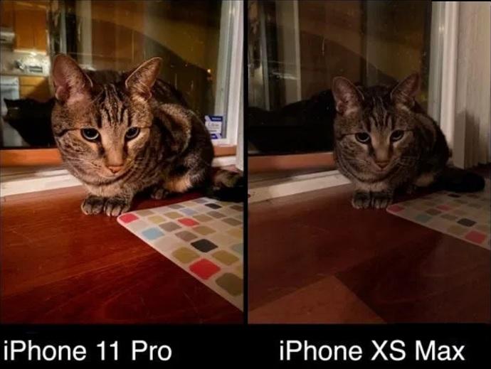 iphone 11 pro vs iphone xs max сравнение фото